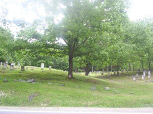 Large Tree in Graveyard